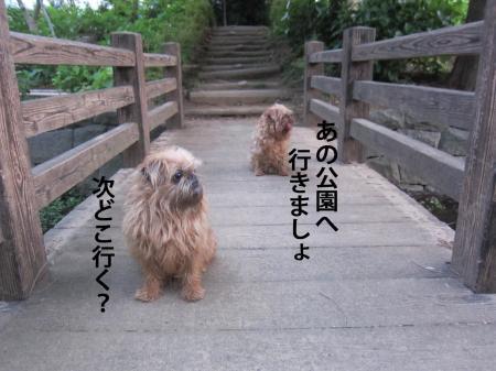 11_convert_20120606110308.jpg