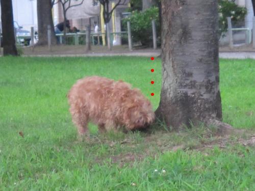 1_convert_20120806140019.jpg