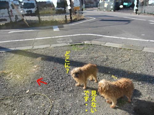 1_convert_20121112131739.jpg