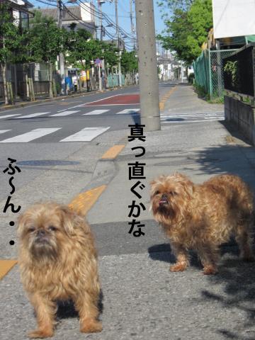 20_convert_20120513101130.jpg