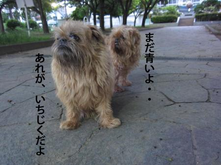 22_convert_20120707125930.jpg
