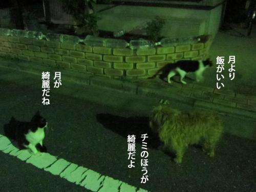 22_convert_20120927154757.jpg