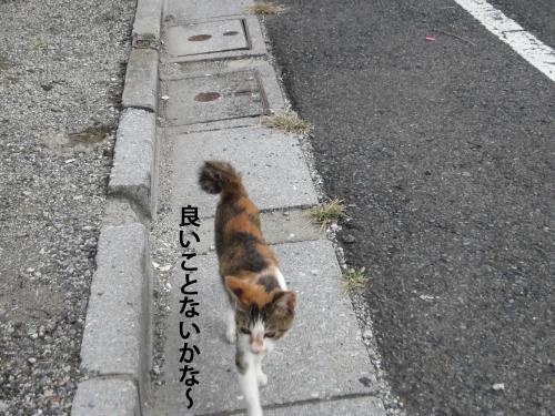 22_convert_20121010142305.jpg
