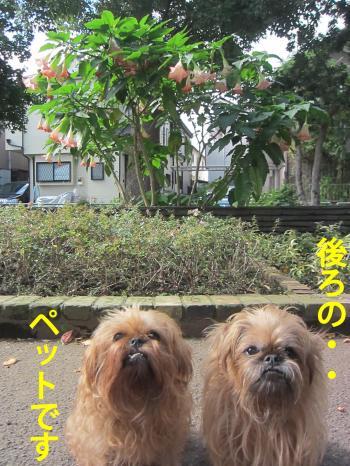 22_convert_20121109152846.jpg