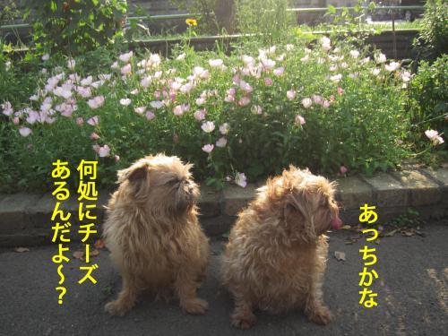 2_convert_20120517093050.jpg