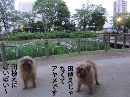 2_convert_20120606110328.jpg