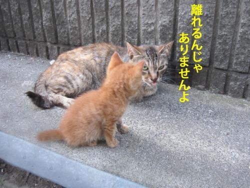 2_convert_20120731134646.jpg