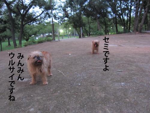 2_convert_20120803132123.jpg