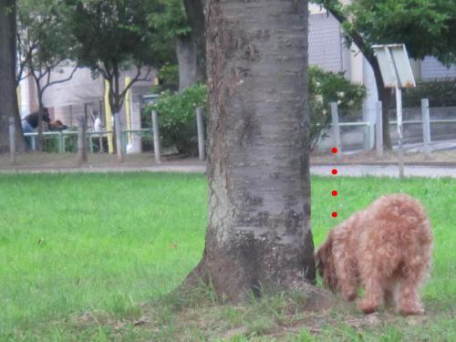 2_convert_20120806140055.jpg