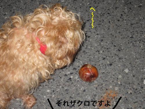 2_convert_20120925151715.jpg