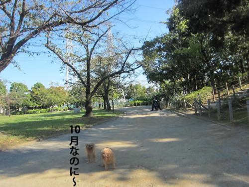 2_convert_20121016160851.jpg