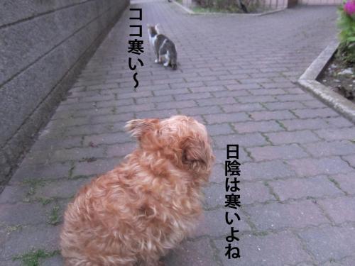 30_convert_20120513101149.jpg