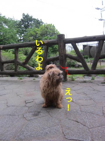 30_convert_20120530103403.jpg