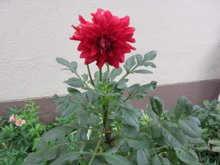 30_convert_20120730134333.jpg