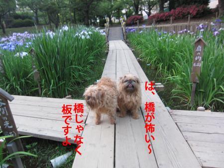 33_convert_20120605103440.jpg