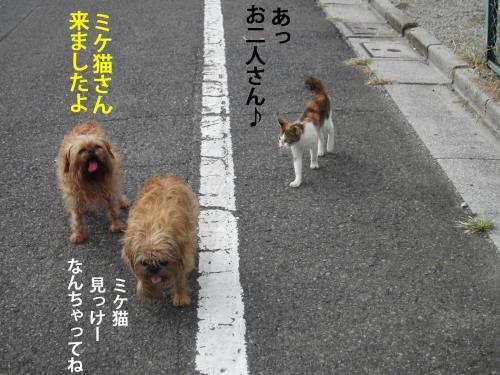 33_convert_20121010142328.jpg