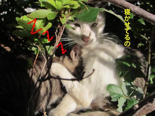 33_convert_20121024174957.jpg