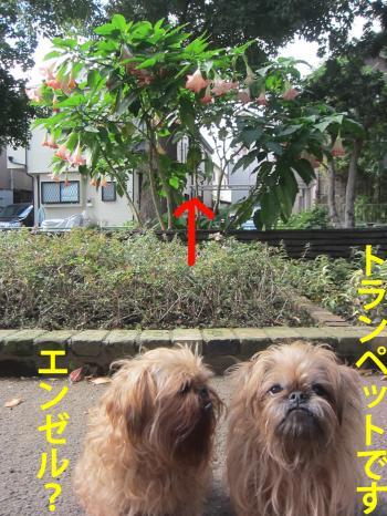 33_convert_20121109152911.jpg
