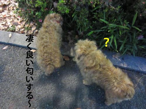 3_convert_20120510100844.jpg