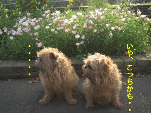 3_convert_20120517093109.jpg
