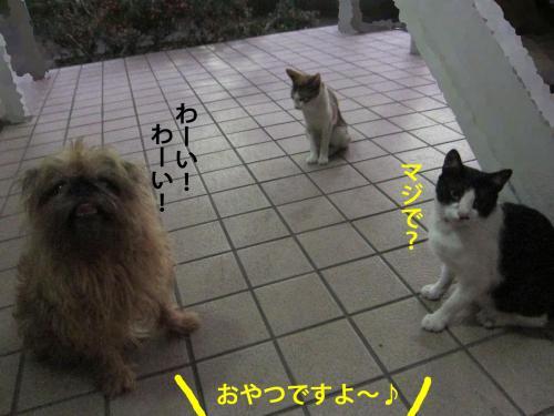 3_convert_20120820135636.jpg