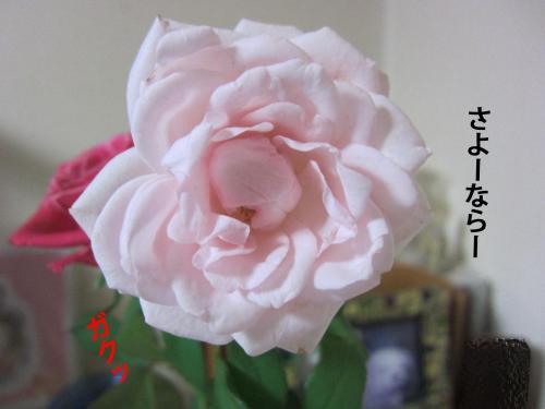 3_convert_20120908144730.jpg