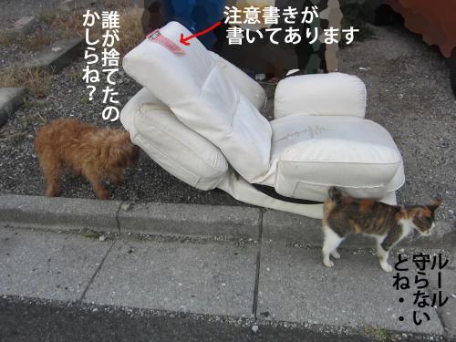 3_convert_20121009164124.jpg
