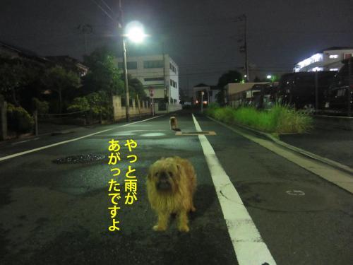3_convert_20121029162426.jpg