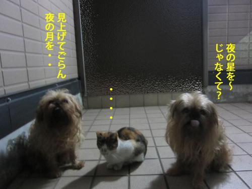 3_convert_20121030170646.jpg