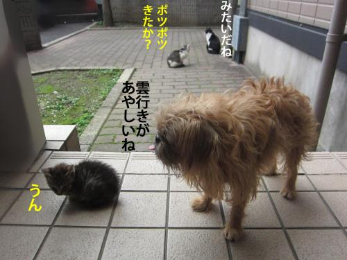 3_convert_20121031152622.jpg