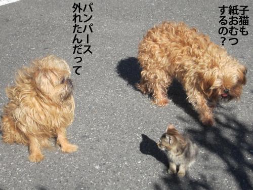 3_convert_20121105172929.jpg