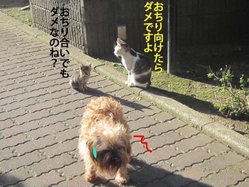 3_convert_20121106175449.jpg