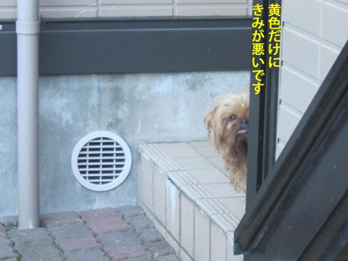 3_convert_20121112131102.jpg