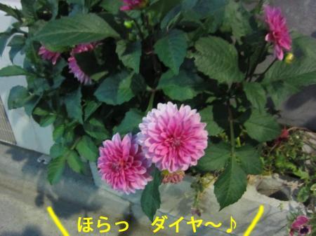 4-0_convert_20120706125039.jpg