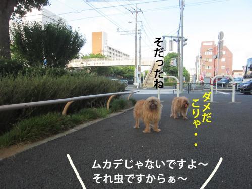 4-0_convert_20120826114224.jpg