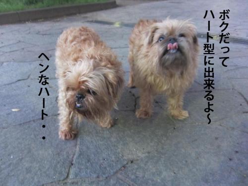 40_convert_20120526103417.jpg