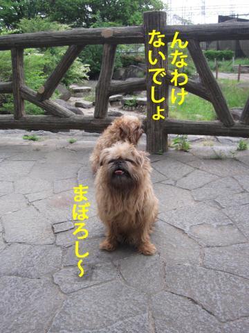 40_convert_20120530103427.jpg