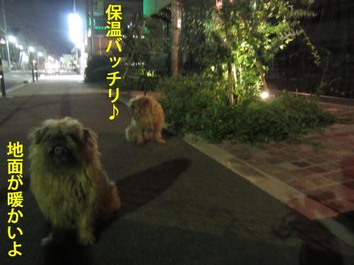 40_convert_20120821112436.jpg