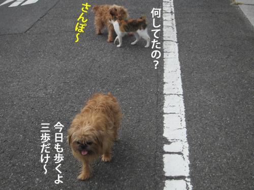 44_convert_20121010142349.jpg