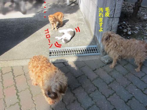 44_convert_20121018171929.jpg