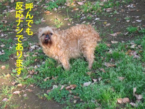 4_convert_20120506104504.jpg