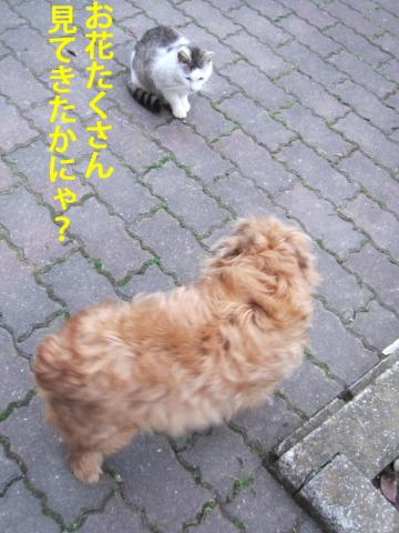 4_convert_20120508111713.jpg
