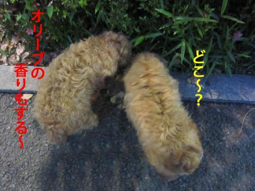 4_convert_20120510100903.jpg
