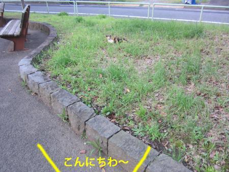 4_convert_20120710130020.jpg