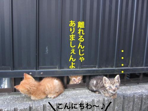 4_convert_20120731134745.jpg