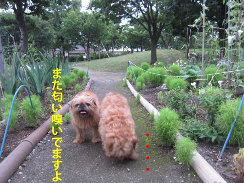 4_convert_20120806140135.jpg