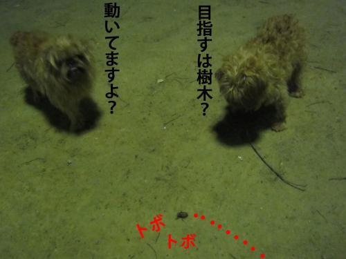 4_convert_20120811140423.jpg