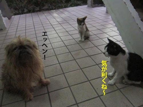 4_convert_20120820135712.jpg