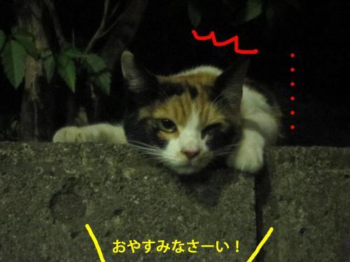 4_convert_20120824131751.jpg