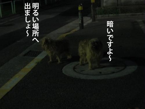 4_convert_20120908144747.jpg